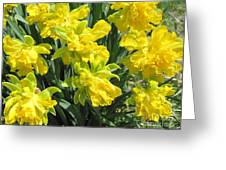 Naturalized Daffodils On The Farm Greeting Card