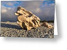 Naturally Sculpted Waterworn Wood On Pebble Beach Greeting Card