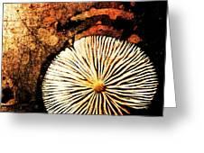 Nature Abstract 14 Greeting Card