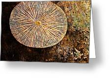 Nature Abstract 22 Greeting Card