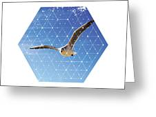 Nature And Geometry - The Seagull Greeting Card