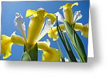Nature Art Prints Yellow White Irises Flowers Greeting Card