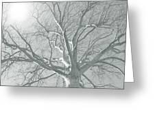 nature - art - Winter Sun  Greeting Card