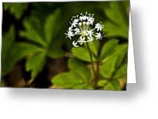 Nature Celebrates Spring With A Burst Of Botanical Fireworks Greeting Card
