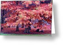 Nature Colors Greeting Card