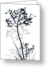 Nature Design Black And White Greeting Card