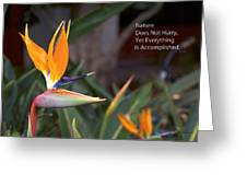 Nature Does Not Hurry Bird Of Paradise Greeting Card