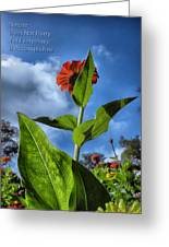 Nature Does Not Hurry Zinnia Standing Tall Greeting Card