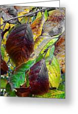 Nature Has Been Recycling For Ages  Greeting Card