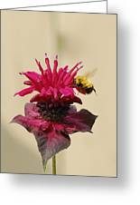 Nature In Harmony  Greeting Card
