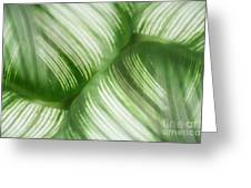 Nature Leaves Abstract In Green 2 Greeting Card