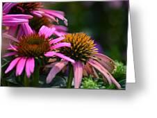 Nature Made Echinacea Greeting Card
