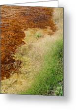 Nature Of Things Greeting Card