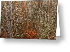 Nature Once Removed Greeting Card