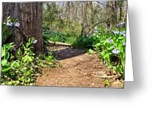 Nature Path Greeting Card