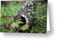 Nature Recycled Greeting Card