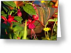 Nature Showing Off Greeting Card by Donald Torgerson