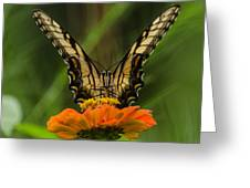 Nature Stain Glass Greeting Card
