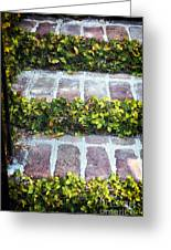 Nature Steps Greeting Card