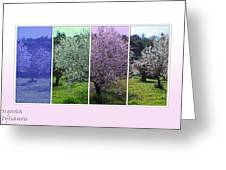 Nature Stripes Greeting Card