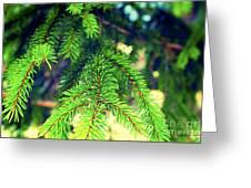 Nature Tagliacozzo Italy Greeting Card