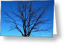 Nature Tree Greeting Card by Boon Mee