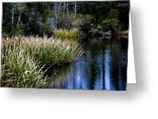 Nature Walk 2 Greeting Card