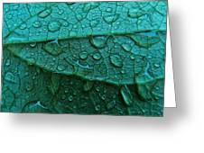Natures Abstract Greeting Card