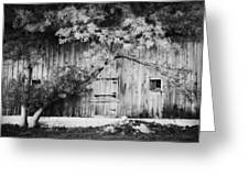 Natures Awning Bw Greeting Card