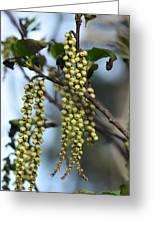 Nature's Beadwork Greeting Card