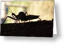 Natures Beast Greeting Card