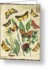 Natures Beauty-no.1 Greeting Card