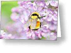 Natures Buzzing Beauty Greeting Card