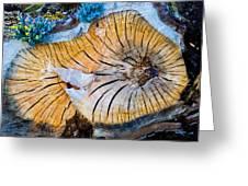 Nature's Calendar Greeting Card