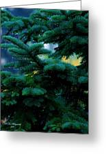Nature's Christmas Tree Greeting Card