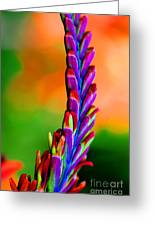 Nature's Colors Greeting Card