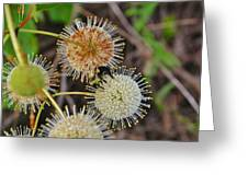 Nature's Delicate Orbs Greeting Card