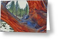 Natures Frame Greeting Card
