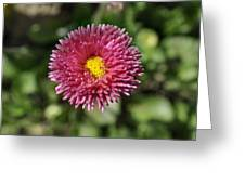 Nature's Full Bloom  Greeting Card