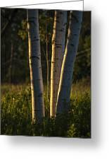 Natures Glow Greeting Card