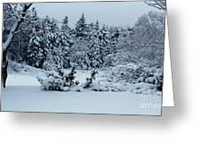 Natures Handywork - Snowstorm - Snow - Trees Greeting Card