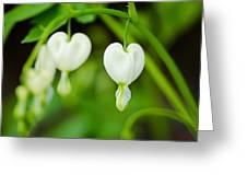 Nature's Hearts Greeting Card