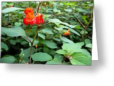 Nature's Jewel Greeting Card