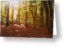 Nature's Light Greeting Card