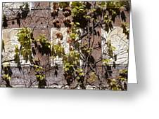 Nature's Mosaic Greeting Card