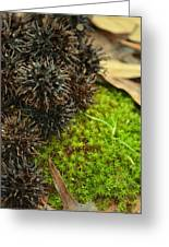 Nature's Moss And Sweetgum Pods Greeting Card