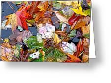 Nature's Paintbrush Greeting Card