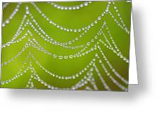 Natures Pearls  Greeting Card
