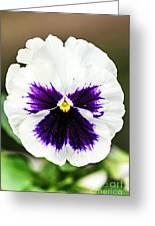 Nature's Purple Angel Greeting Card