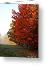 Nature's Red Highlights Greeting Card